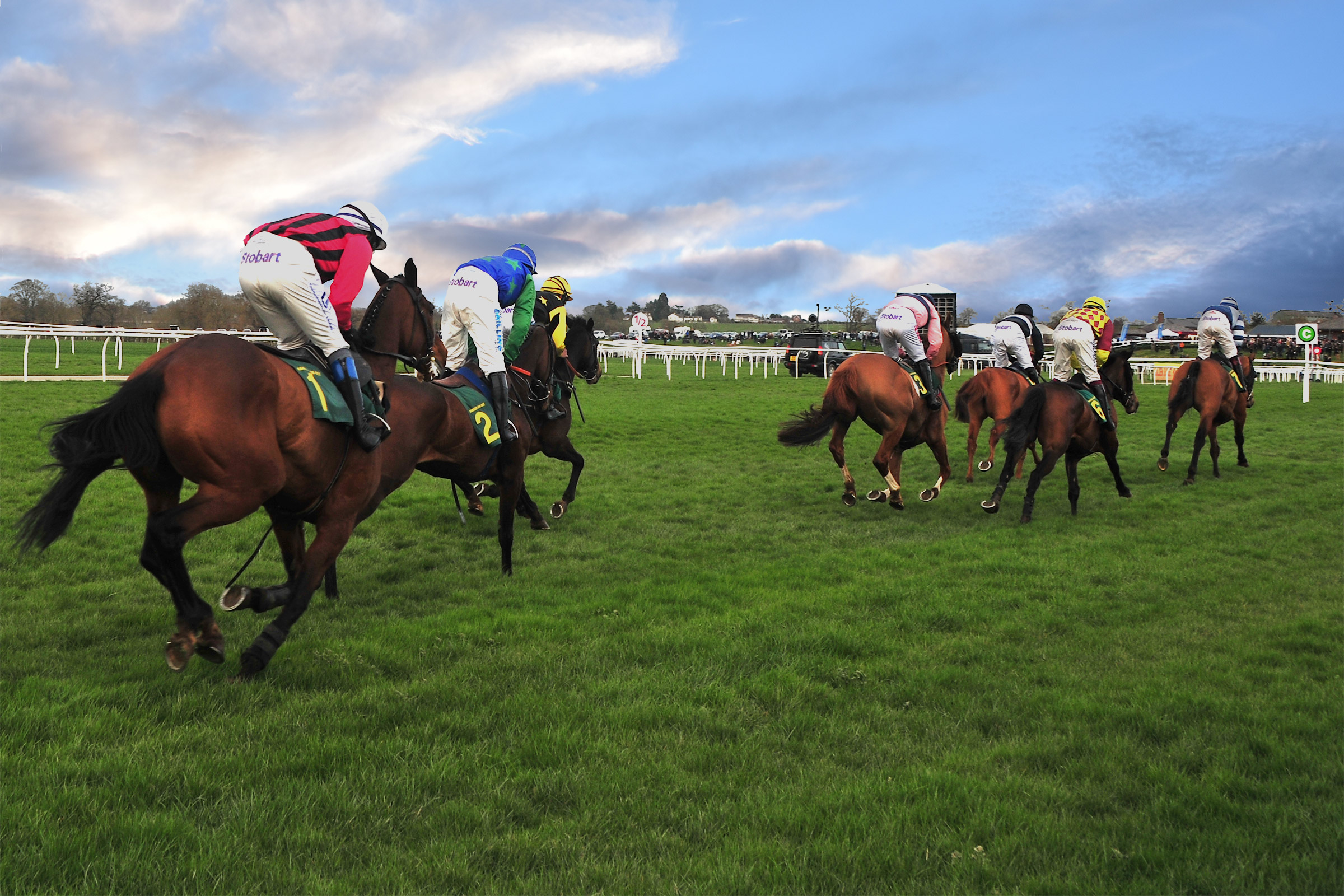 Beginners guide to Horse Racing