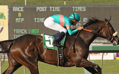 How to find winning Horses