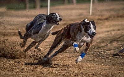 3 Types of Greyhound Bets for Beginners